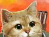 Armored Kitten Zombie Hunter for PC